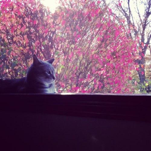 redleafcat